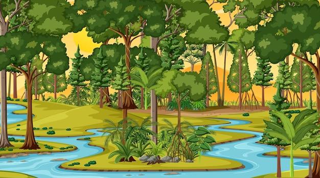 Rzeka wzdłuż sceny leśnej o zachodzie słońca