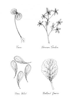 Rzeżucha, portulaka, sałatka kukurydziana i zieloni