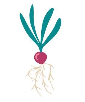 Rzodkiewka. świeża naturalna rzodkiewka organiczna. zdrowy dietetyczny produkt roślinny. może być używany jako godło, logo, nadruk na stronie internetowej, naklejka. płaskie ilustracji wektorowych.