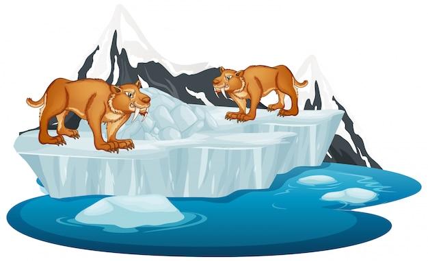 Sabertooth na lodowcu zimowym