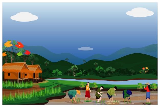 Sadzenie ryżu rolnika w projektowaniu pola ryżowego