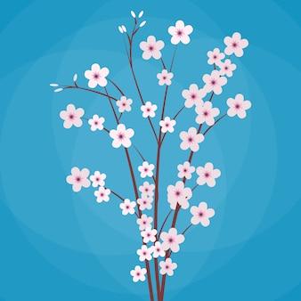 Sakura japonia gałąź wiśni