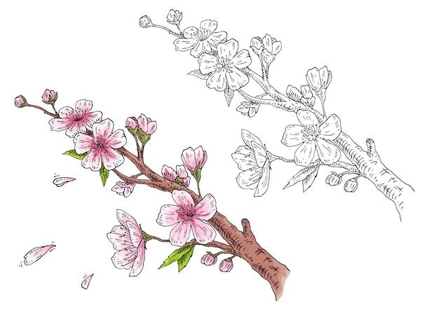 Sakura kwiat. gałąź wiśni z kwiatami i pączkiem. spadające płatki.