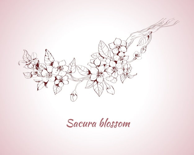 Sakura kwiat szkic