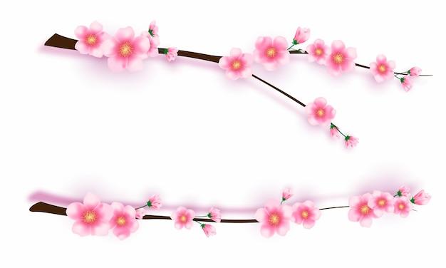Sakura kwiaty i liście