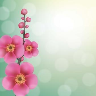 Sakura kwiaty z bokeh