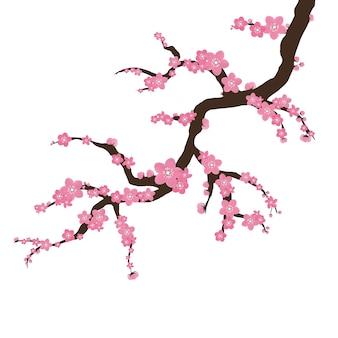 Sakura na białym tle. gałąź kwitnąca sakura z kwiatami, wiśnia, wiosna kwiatowy koncepcja. kwiaty japońskie i azjatyckie.