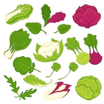 Sałaty sałatkowe liściaste warzywa wektor zestaw ikon na białym tle