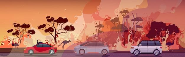 Samochody i zwierzęta uciekające przed pożarami lasów w australii pożar pożary buszu spalanie drzew katastrofa ewakuacyjna koncepcja intensywne pomarańczowe płomienie poziome