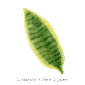 Sansevieria liść odizolowywający na białym tle