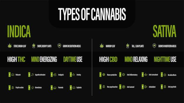 Sativa vs indica, czarny plakat informacyjny o rodzajach konopi z infografiką.