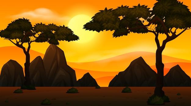 Savanah drzew sylwetki o zachodzie słońca