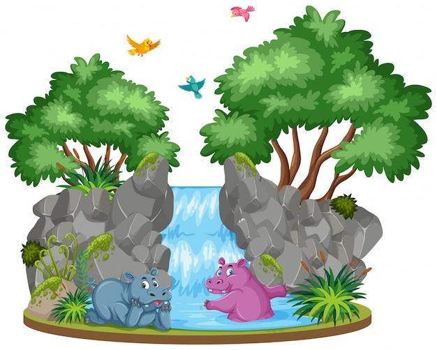 Scena dwóch hipopotamów przy wodospadzie