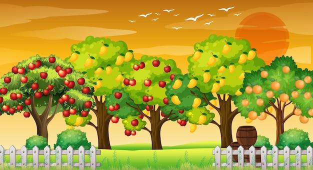 Scena farmy z wieloma różnymi drzewami owocowymi o zachodzie słońca