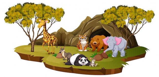 Scena górska z wieloma zwierzętami