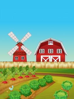 Scena gospodarstwa z ogrodu warzywnego i stodoły