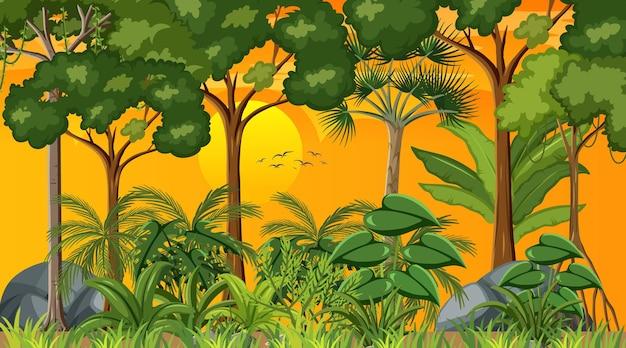 Scena krajobrazu lasu o zachodzie słońca