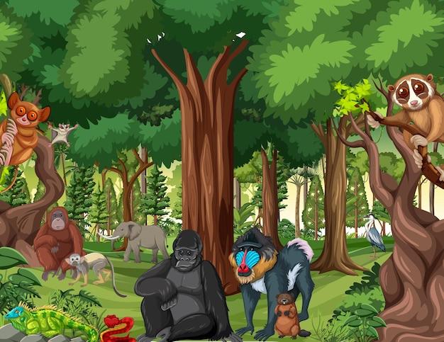 Scena Lasu Deszczowego Z Dzikimi Zwierzętami Premium Wektorów