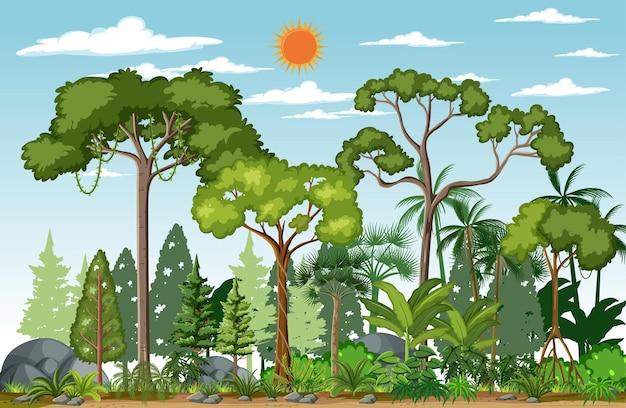 Scena leśna z wieloma drzewami w ciągu dnia