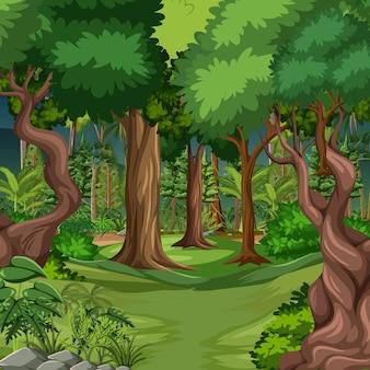 Scena leśna z wieloma drzewami