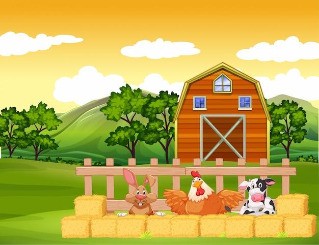 Scena na farmie ze zwierzętami i stodołą na farmie