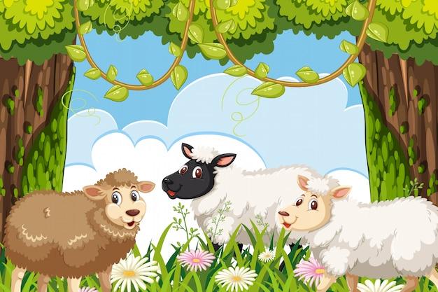 Scena owiec w lesie