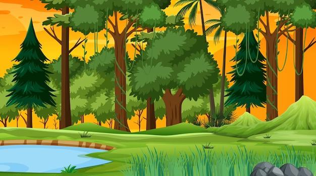 Scena przyrody lasu ze stawem i wieloma drzewami o zachodzie słońca