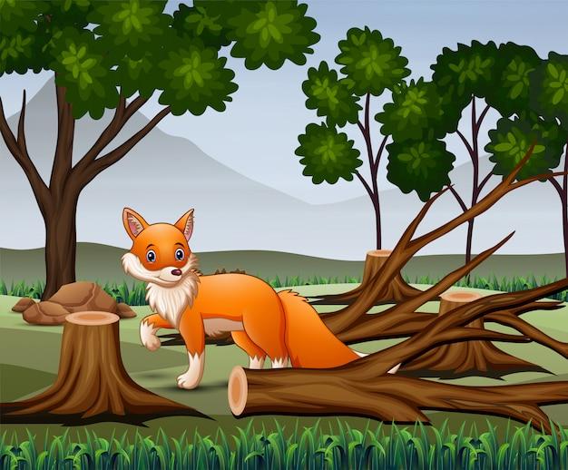 Scena wylesiania z głodującym lisem