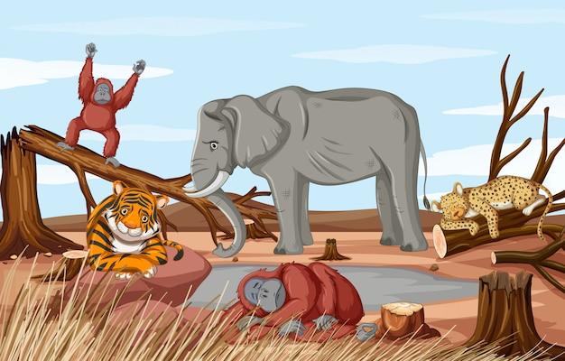 Scena wylesiania z umierającymi zwierzętami podczas suszy