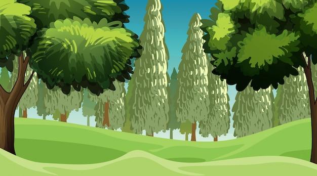 Scena z drzewami w lesie