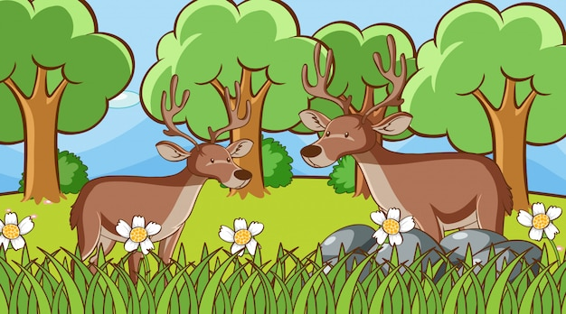 Scena z dwoma jeleniami w lesie