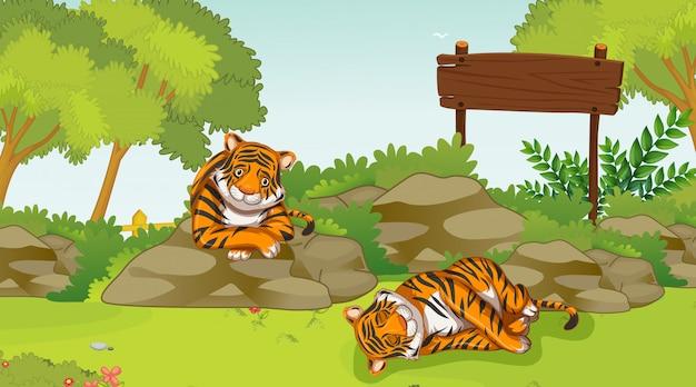 Scena z dwoma smutnymi tygrysami w parku