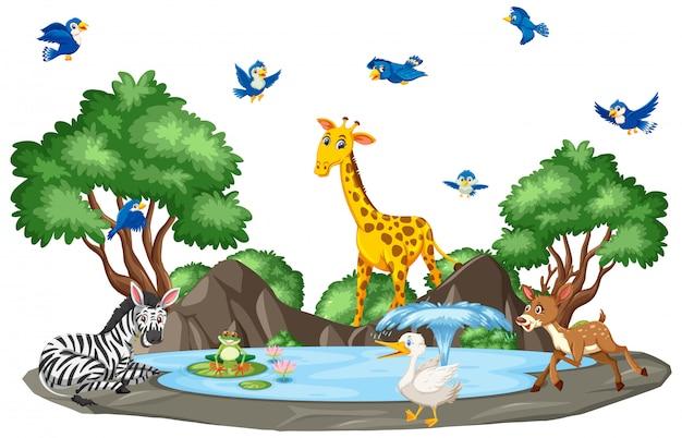 Scena z dzikimi zwierzętami i stawem