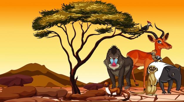 Scena z dzikimi zwierzętami w polu