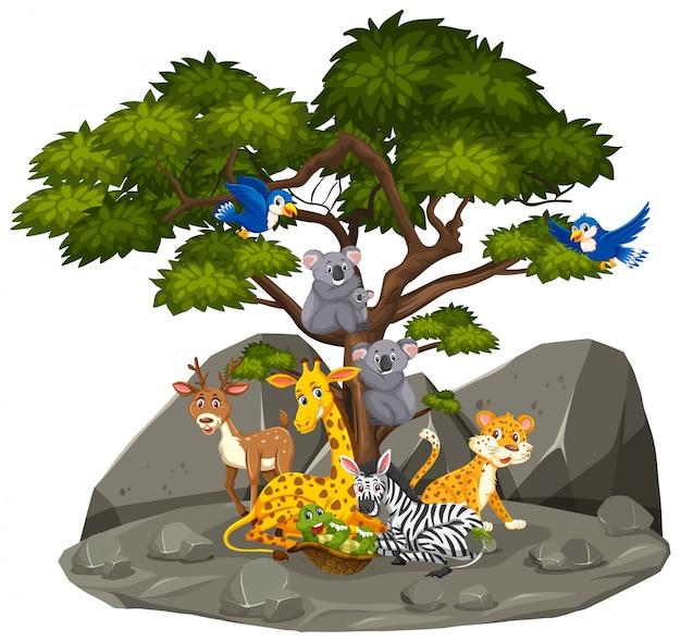 Scena z dzikimi zwierzętami w skalistej górze