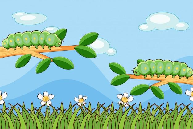 Scena z gąsienicami na gałęziach