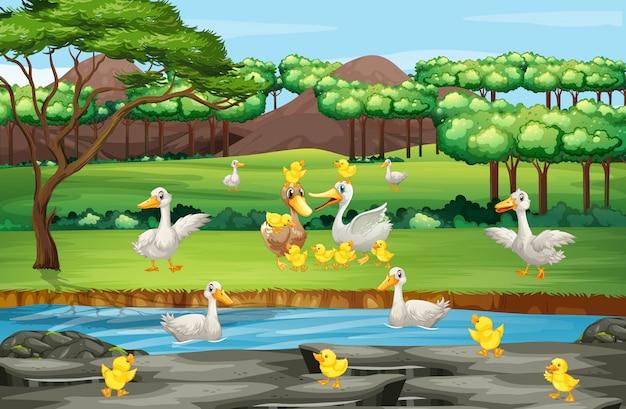 Scena z kaczkami i kurczątkami w polu