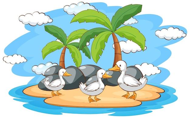 Scena z kaczkami na wyspie