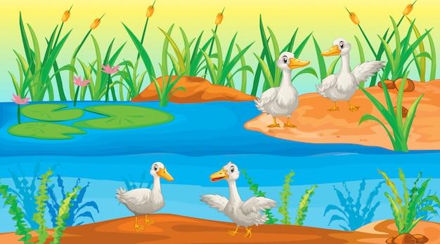 Scena z kaczkami nad rzeką