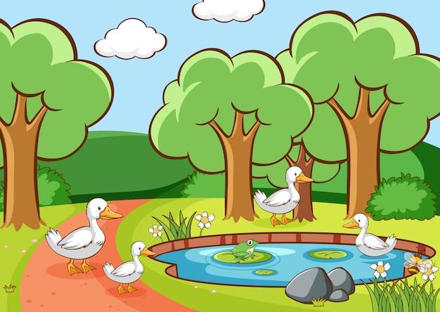 Scena z kaczkami w parku