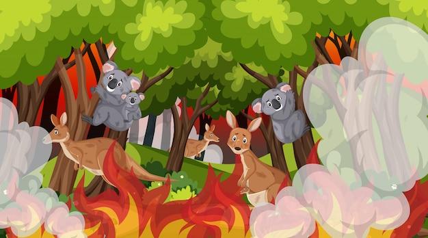 Scena z koalami i kangurami w wielkim pożarze