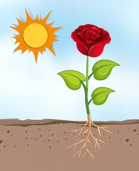 Scena z kwiatami rosnącymi w jasny, słoneczny dzień
