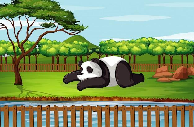 Scena z pandą w ogrodzie