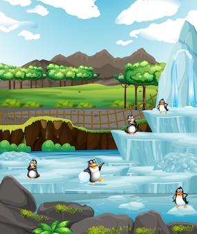 Scena z pingwinami na lodzie