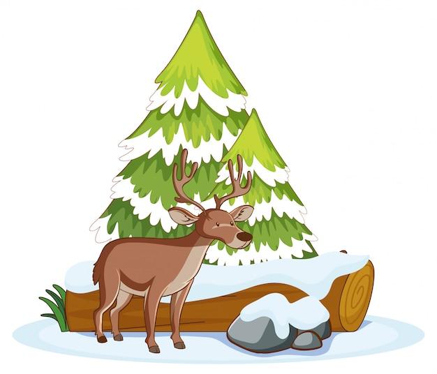 Scena z reniferem w śniegu