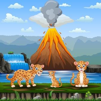 Scena z rodziną lampartów i ilustracją wybuchu wulkanu