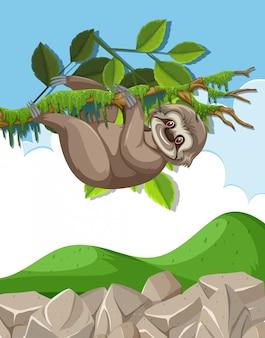 Scena z słodkie lenistwo wiszące na gałęzi