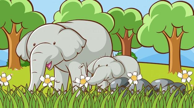 Scena z słoniami w parku
