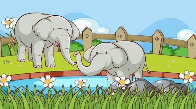 Scena z słoniami w rzece