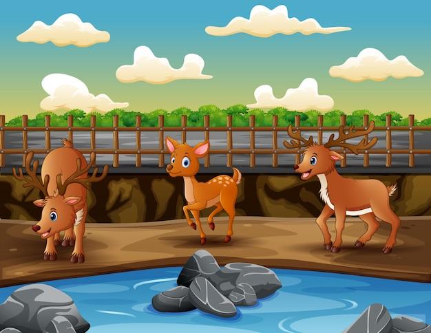 Scena z wiele rogaczami przy zoo ilustracją